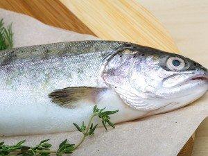 pesce smederevo apertura fabbrica